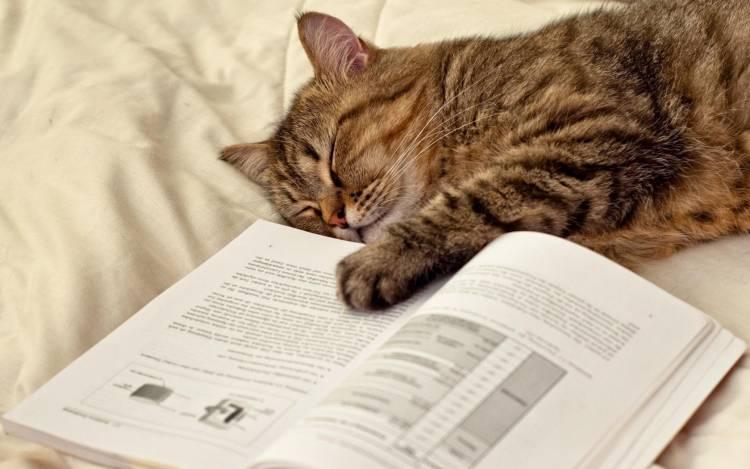 Kedileri Uyutmanın En Kolay Yolları