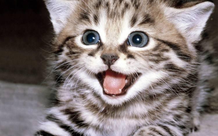 Kedilerin Sevgilerini Gösterdiği 3 Hareket