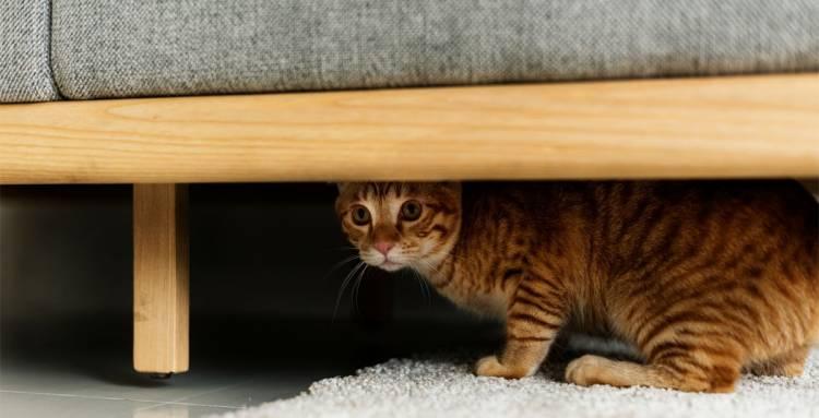 Kedi Yetiştirirken Yapılmaması Gerekenler