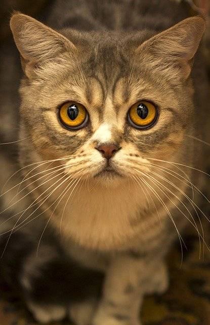 Kedilerin Göz Yapısı