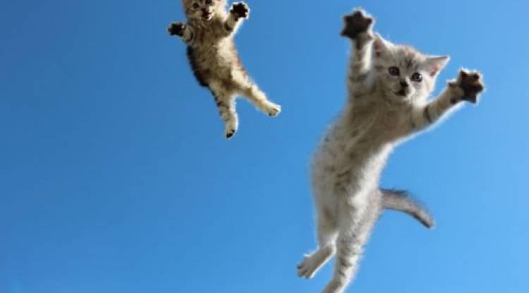 Kediler Neden 9 Canlıdır ?