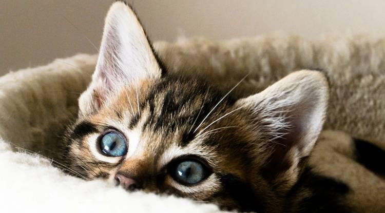 Kedileri Eğitme Yöntemi Ve Gerekli Bilgiler