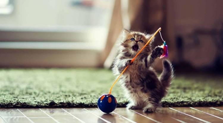 En Uygun Ve Ucuz kedi oyuncakları hangileridir?