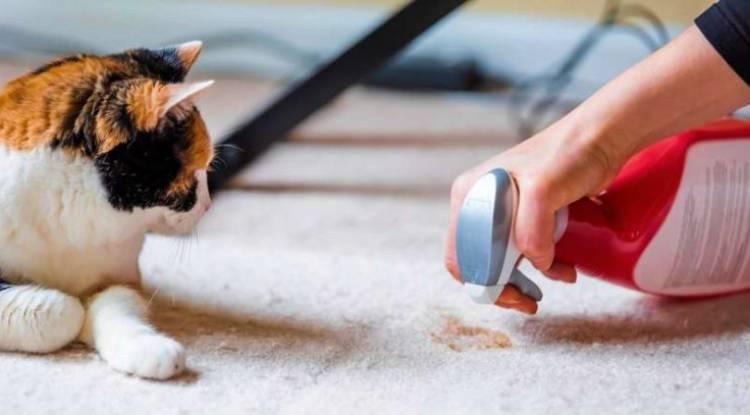 Kedi İdrarı Kokusundan Kurtulmak Mümkün Mü?
