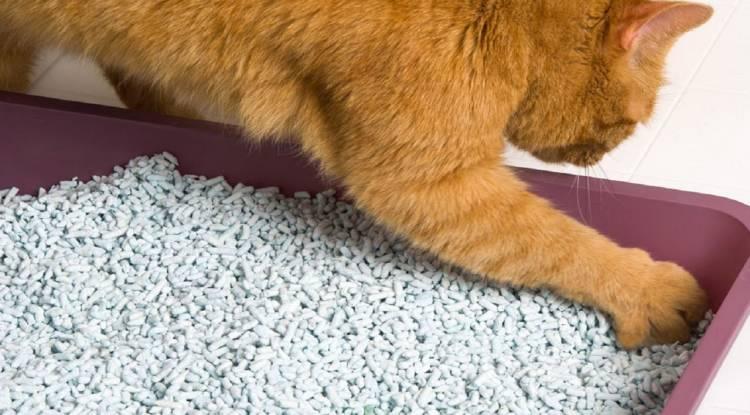 Kedi Kumu Kullanımında Yanlış Yapılanlar