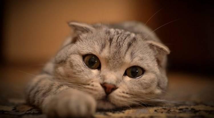 Daha Uzun ve Sağlıklı Bir Kedi Hayatı İçin Neler Yapılmalı .?