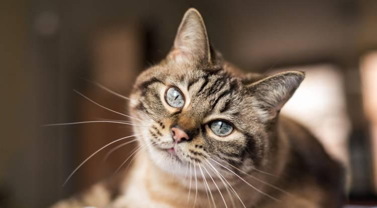 Saldırgan Kediler Nasıl Sakinleştirilir ?