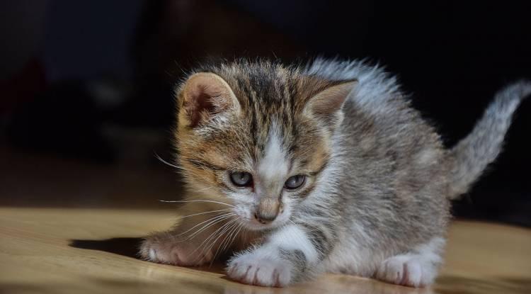 Yavru Kedi Eğitimi