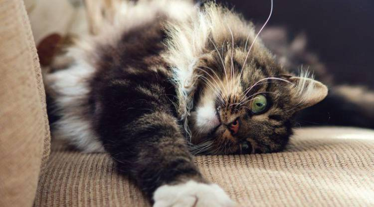 Kedilerde Mama Seçiciliği Nasıl Geçer?