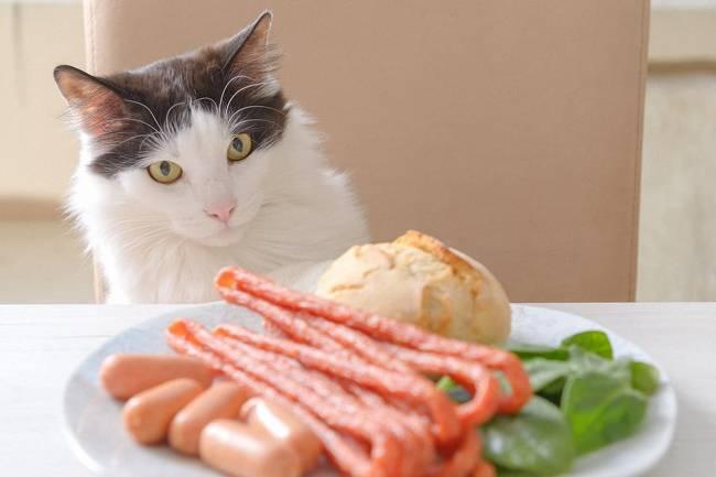 Kediler İçin Tehlikeli Yiyecekler