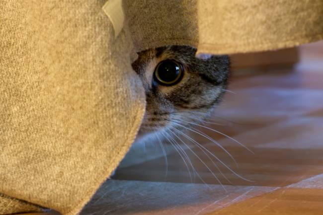 Korkan Kedime Ne Yapabilirim ?