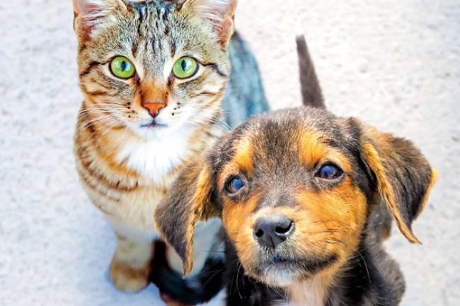 Kediler ve Köpekler Nasıl Görür?