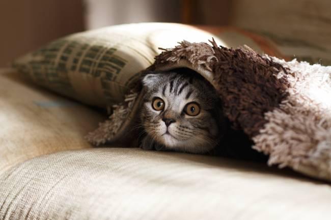 Korkmuş, Sinirli ve Çekingen Kedilere NASIL YAKLAŞMALI .?