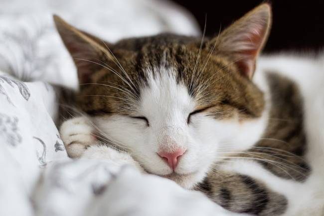 Kediler En Çok Hangi Oyuncaklar İle Oynar ?