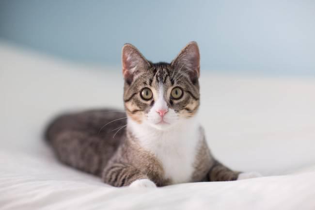 Kedilere Hangi Aşılar Yapılır ?