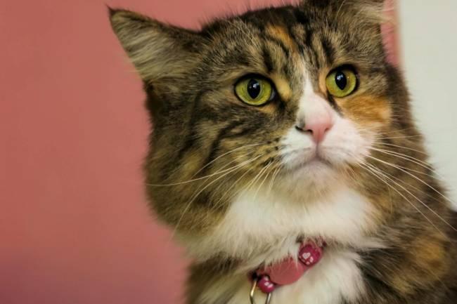 Kediler Hakkında Bazı Bilgiler