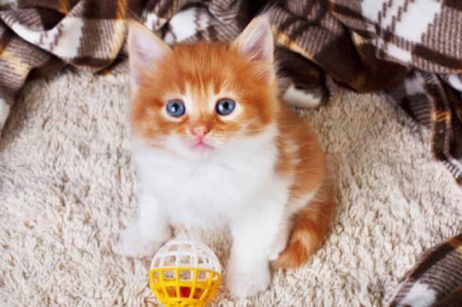 Yavru Kedilere Yönelik İpuçları