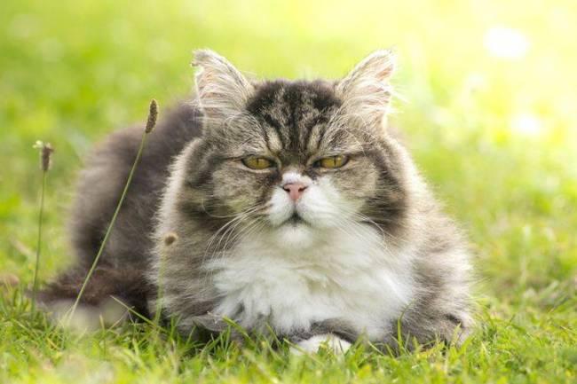Yaşlı Kediler için Kedi Oyuncakları