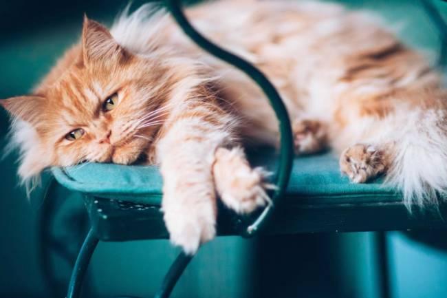 Evde Yalnız Kalacak Olan Kedinizi Memnun Etme Yöntemleri