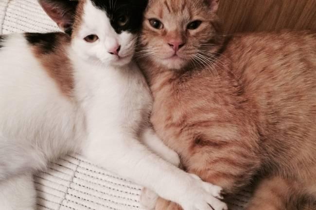 Çiftleşme Zamanı Gelen Kedi Nasıl Anlaşılır?