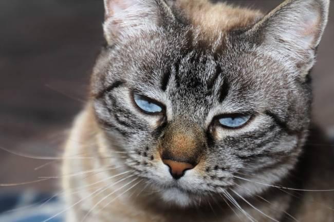 Depresyonda Olan Kedi Nasıl Anlaşılır