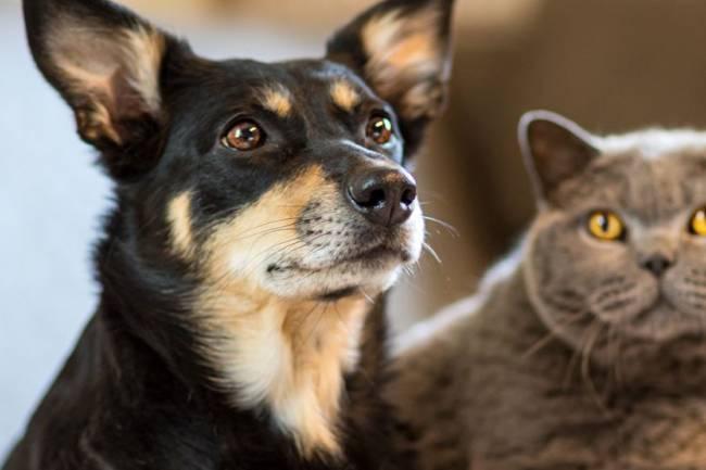 Kedi Beslemek  Köpek Beslemekten Daha Mı Kolay?