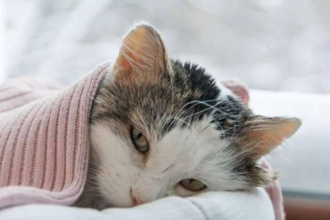 Kediler Neden Depresyona Girer ve Nasıl Geçer?