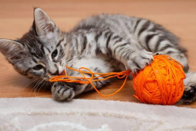 Kediler için Oyuncak Yapımı